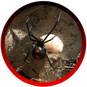 Spider Exterminators Simi Valley, CA
