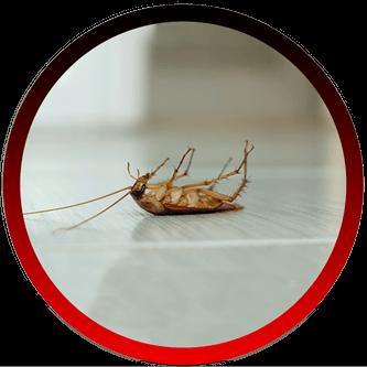 Pest Control Companies Santa Barbara CA