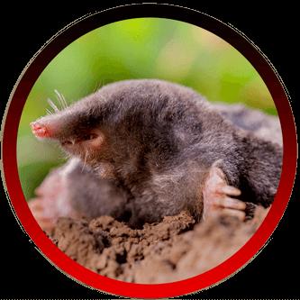 Rat Rodent Exterminators Santa Barbara CA